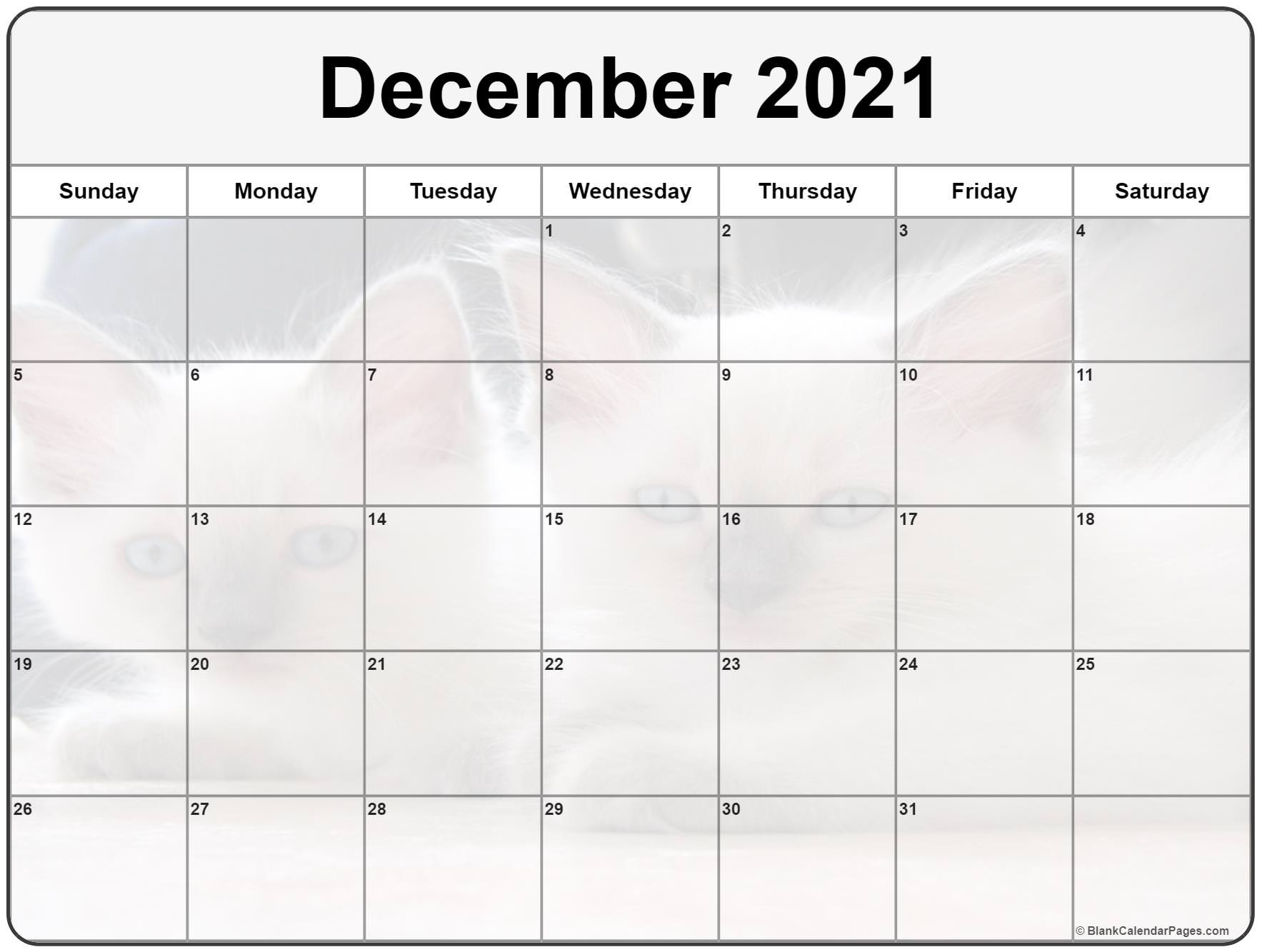 December 2020 printable calendar with cute cat filters
