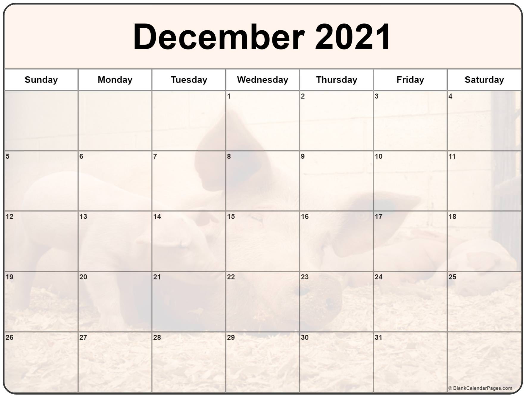 December 2021 picture calendar with cute piglet filters